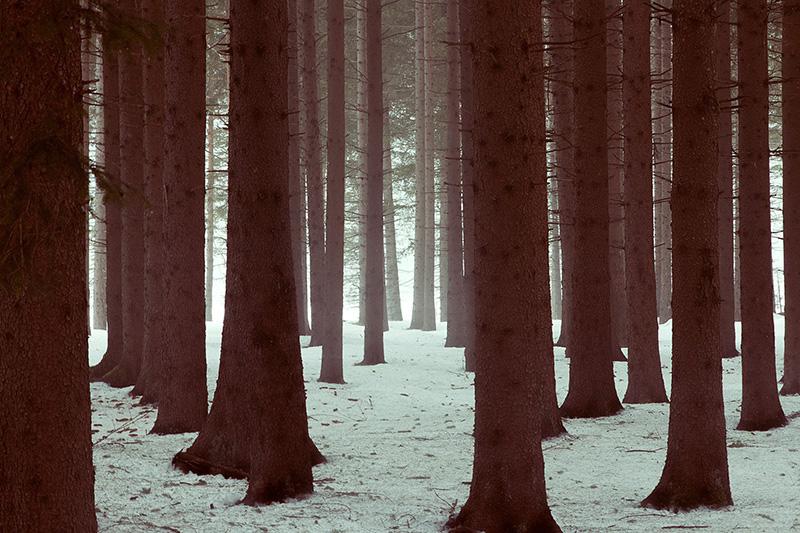 sofia podestà; sofiapodesta; sofia podestà photographer; photography; cortina; cortina d'ampezzo; dolomiti; fog; winter; snow;
