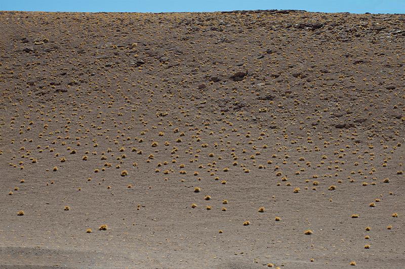 fotografi emergenti; desertica; desert; landscape desert; atacama; atacama desert; landscape photography; chile; sofia podestà;
