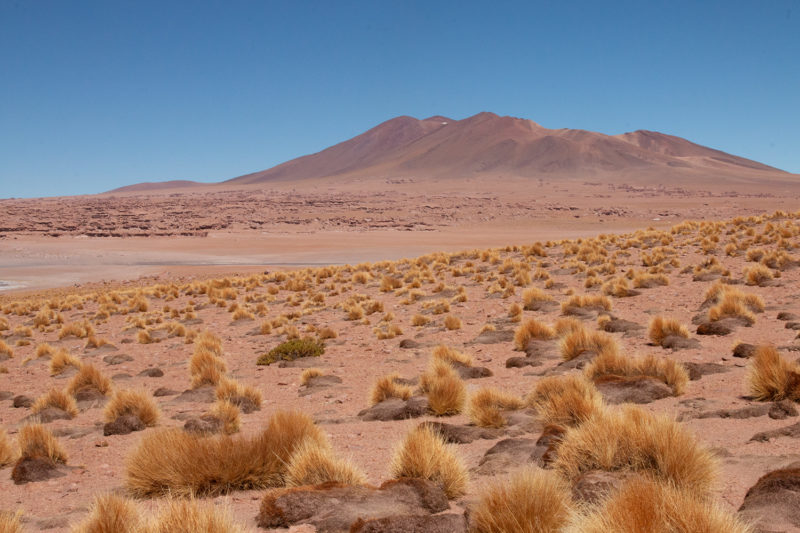 sofia podestà; atacama desert; deserto cileno; salar de tara; paesaggio naturale; sofia podestà; a colorful universe